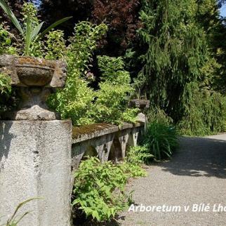 Arboretum v Bílé Lhotě